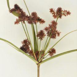Mariscus solidus (Cyperaceae), White River, Mpumalanga, RSA