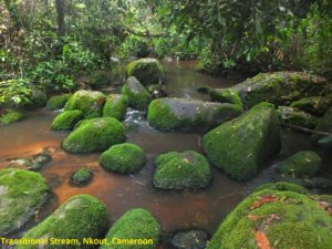 A06 Transitional Stream S0298869